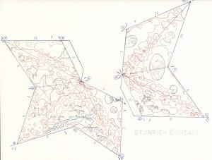 Starfish Dorsal Pattern web