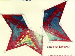 Starfish Dorsal painted web