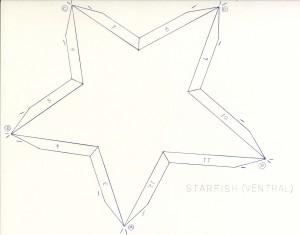 Starfish Ventral Net web