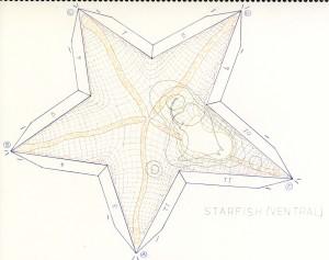 Starfish Ventral Pattern web
