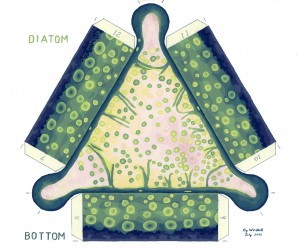 Diatom Painted Bottom ready web