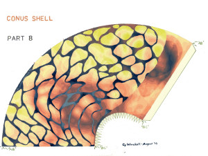 Conus B Painted
